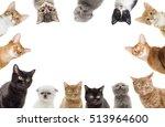 Stock photo funny kittens peeking 513964600