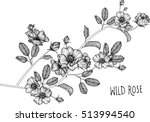 Stock vector drawing flowers wild roses clip art or illustration 513994540