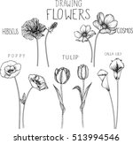 drawing flowers. poppy tulip... | Shutterstock .eps vector #513994546