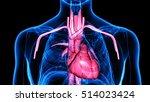 human body organs  heart .3d | Shutterstock . vector #514023424