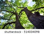 strong trunk an tree top | Shutterstock . vector #514034098