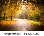 Autumn Woodland Scenery