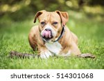 happy dog lying on the grass | Shutterstock . vector #514301068