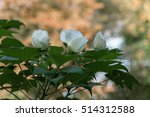 a large flower on a background... | Shutterstock . vector #514312588