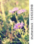 Small photo of Aster alpinus (Alpine aster) macro, toned using filters, soft focus, blured background