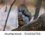 squirrel in autumn forest | Shutterstock . vector #514326703