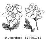 jasmine sambac flower blossom.... | Shutterstock . vector #514401763