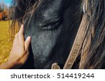 A Black Horse Portrait Feeling...