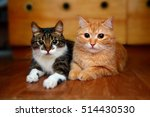 Stock photo two cats 514430530