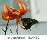 Monarch Butterfly On Tiger Lily