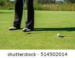 Golfer Short Putting Golf Ball...