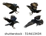 birds   mix flying common... | Shutterstock . vector #514613434