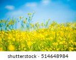 amazing scenery of blooming... | Shutterstock . vector #514648984