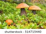 Group Of Three Orange Birch...