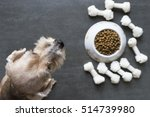 dog besides a bowl of kibble... | Shutterstock . vector #514739980