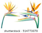 bird of paradise flowers ... | Shutterstock . vector #514773370