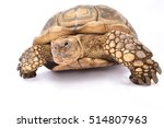Stock photo african spurred tortoise centrochelys sulcata 514807963