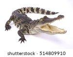 Siamese Crocodile Crocodylus...