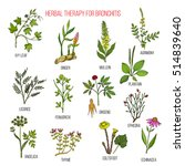 Herbal Therapy For Bronchitis ...