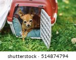 tiny little dog in the red cage ... | Shutterstock . vector #514874794