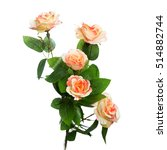 Stock photo shrub roses 514882744