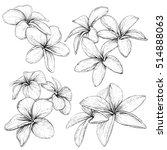 plumeria. hawaii  bali ... | Shutterstock .eps vector #514888063