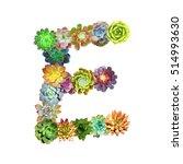 succulent letter e