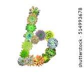 succulent letter b