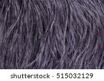 Ostrich Feathers  Black Textur...