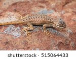 Desert Lizard  Utah  United...