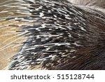 porcupine | Shutterstock . vector #515128744