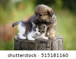 Stock photo cute puppy and kitten on the grass outdoor 515181160