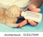 Stock photo feeding little red kitten with milk replacer from bottle 515217049