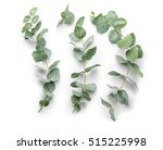green eucalyptus branches on... | Shutterstock . vector #515225998
