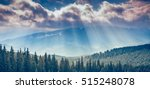 majestic pine tree forest at... | Shutterstock . vector #515248078