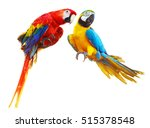 Two Colorful Red Parrots Macaw...