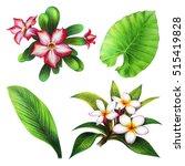 Tropical Set Botany  Kalachuch...