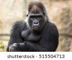 Grumpy Gorilla Making Eye...