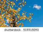 Detailed Tree Branches With...