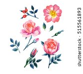 watercolor hand painted roses.... | Shutterstock . vector #515561893