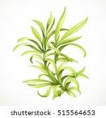 marine green algae sea life... | Shutterstock .eps vector #515564653