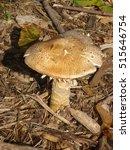 Mushroom Toad Stool
