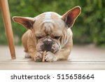 funny face of french bulldog.... | Shutterstock . vector #515658664