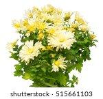 bouquet of yellow... | Shutterstock . vector #515661103