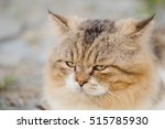 portrait of adorable little cat ... | Shutterstock . vector #515785930