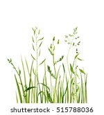 watercolor drawing green grass  ... | Shutterstock . vector #515788036