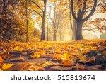 Fallen Leaves In Autumn...