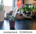 succulent plant | Shutterstock . vector #515833144