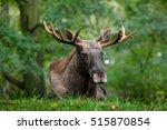 wildlife scene from sweden.... | Shutterstock . vector #515870854