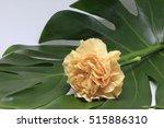 a yellow carnation   Shutterstock . vector #515886310